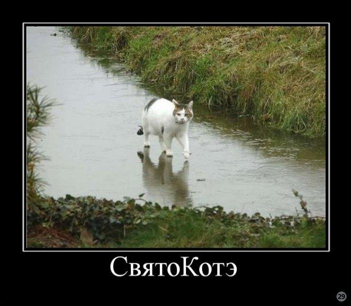 4017627_1284890203_cmex29_ru_657 (700x611, 66Kb)