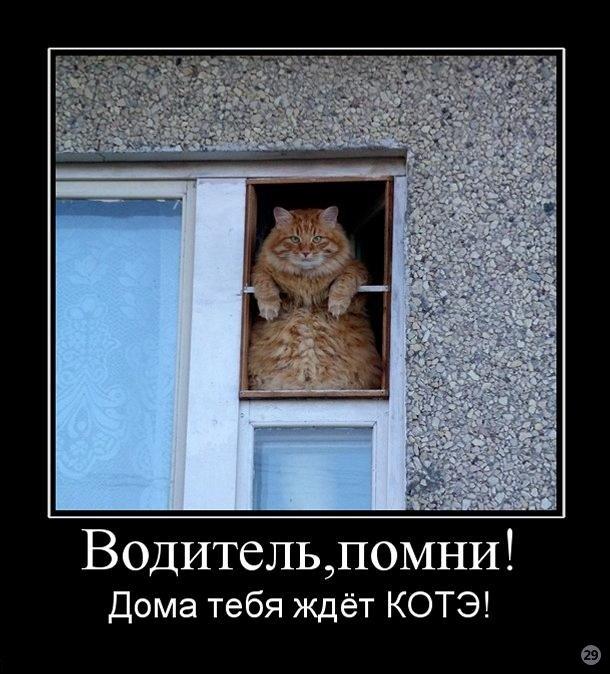 4017627_1284890227_cmex29_ru_654 (610x674, 88Kb)