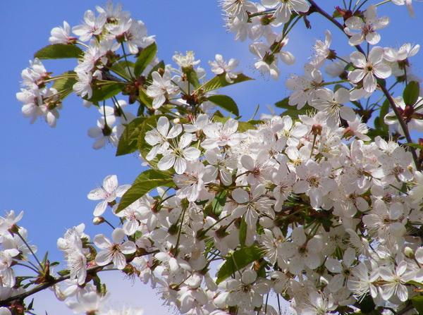 Полвека цветущих садов