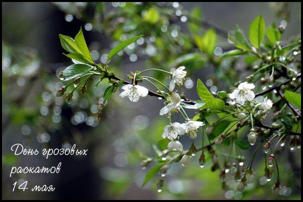 http://img1.liveinternet.ru/images/attach/c/2/74/198/74198775_1661313_14maya2011.jpg