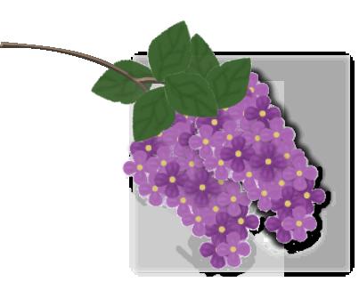 lilas_1 (403x335, 104Kb)