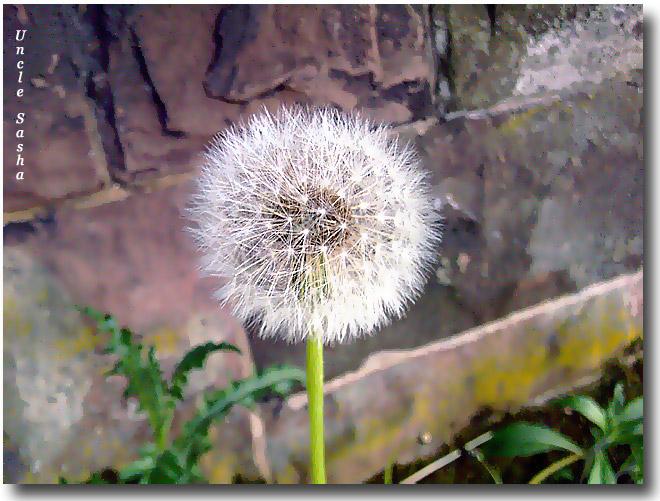 Foto-0042.05.11.2.a (660x501, 172Kb)