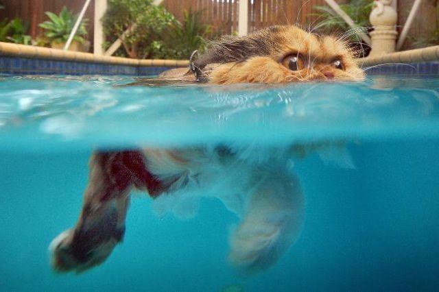 Swin_cats_06 (640x426, 43Kb)