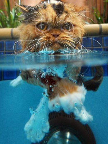 Swin_cats_08 (450x600, 53Kb)