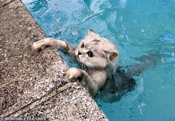 Swin_cats_12 (560x387, 70Kb)