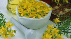 herbal-healing (227x125, 12Kb)