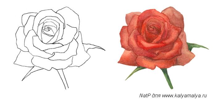 Розу начинаем рисовать с