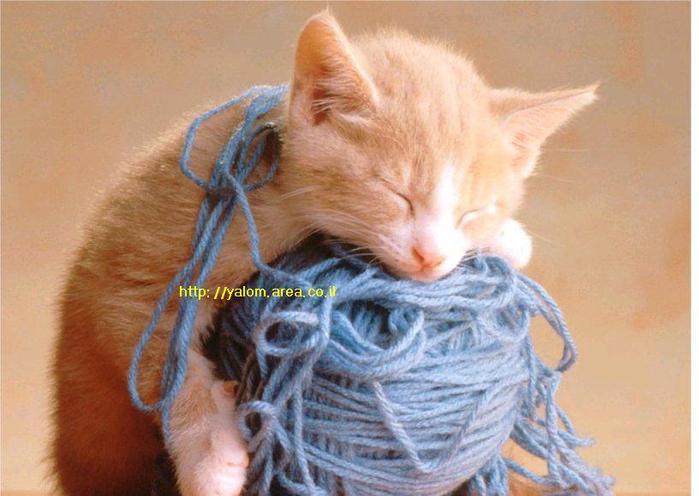 kitty3 (700x496, 47Kb)