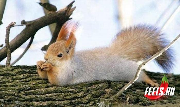 Белка на дереве отдыхает (700x415, 110Kb)