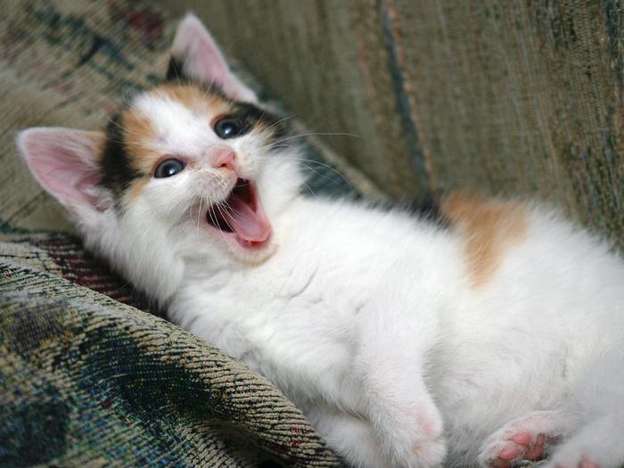 kedi-resimleri-11-1287686948 (700x525, 384Kb)
