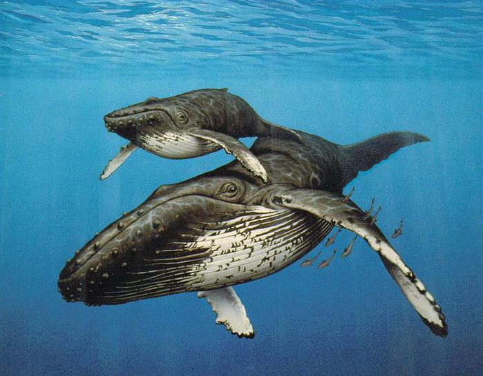 humpback-whales (700x545, 67Kb)