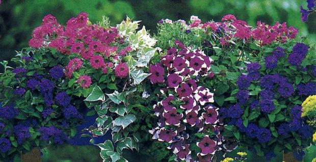 Схемы цветочных композиций для балконных ящиков..., interesnoe. jatshik2 thumb Украшаем свою жизнь.
