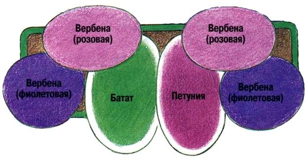Схемы цветочных композиций для балконных ящиков..., interesnoe. shema2 Украшаем свою жизнь.