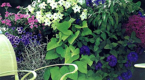 Схемы цветочных композиций для балконных ящиков..., interesnoe. jatshik3 thumb Украшаем свою жизнь.