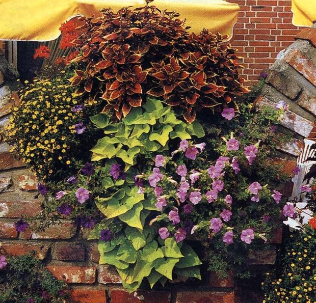 Как сажать цветы в балконный ящик.