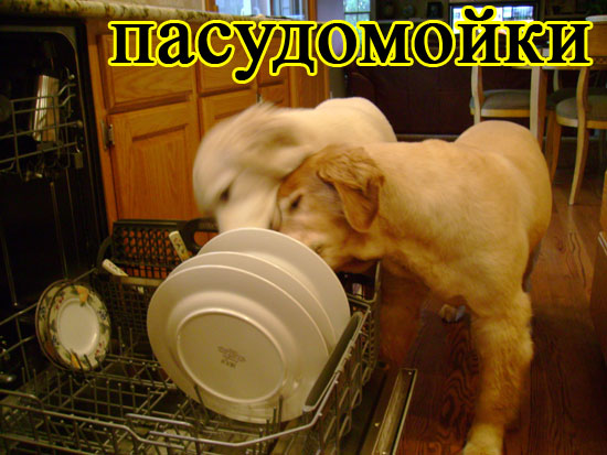 http://img1.liveinternet.ru/images/attach/c/2/74/368/74368351_large_3234145_ec25a7c7fa5c.jpg