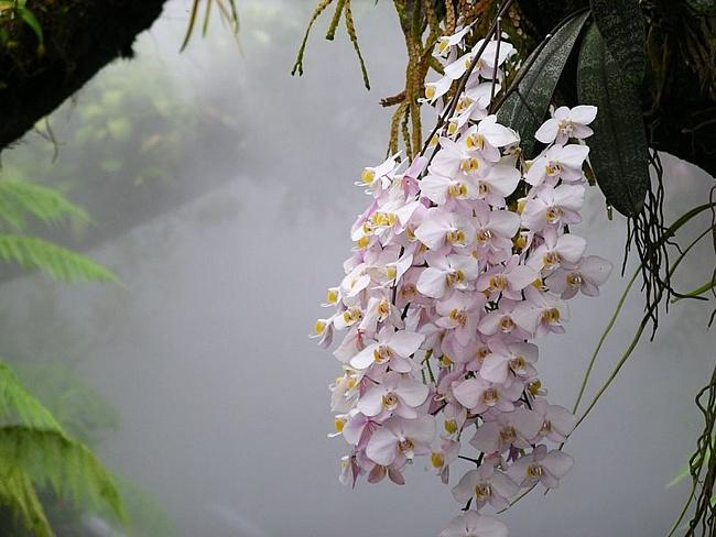 Орхидеи (650x488, 111Kb)