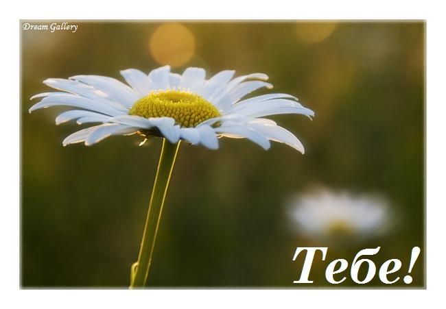 tebe2 (650x451, 142Kb)