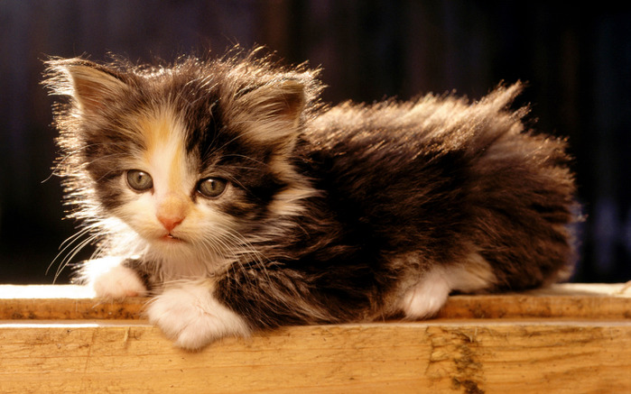 1219133118_1280x768_cute-cat-baby (700x437, 113Kb)