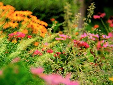 Flowerbed_thumb (370x276, 58Kb)