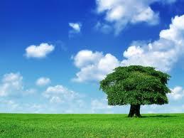 дерево уборка (259x194, 7Kb)