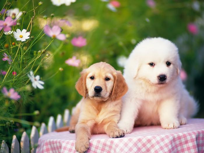 Наша домашние животные - Красивые милые щенки на Sibnet