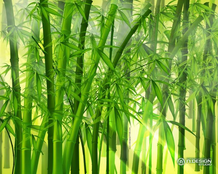 bamboo_1280x1024 (700x560, 206Kb)