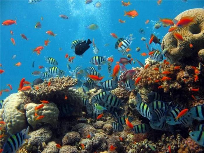 diving1 (700x525, 71Kb)