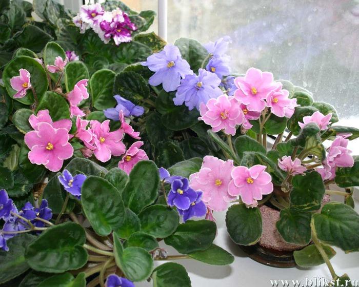 фото комнатных цветов