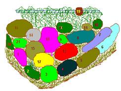 Цветник хамелеон 2 лето (245x184, 62Kb)