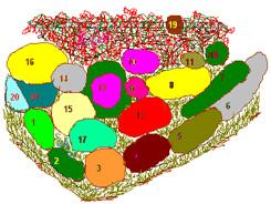Цветник хамелеон 3 (245x184, 68Kb)