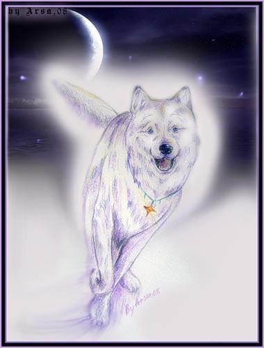 волк1 (380x500, 37Kb)