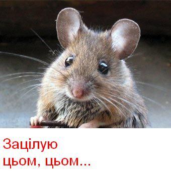 4171694_mishka (340x340, 20Kb)