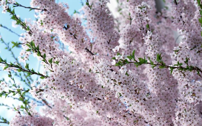 Картинки с большим разрешением цветы 3