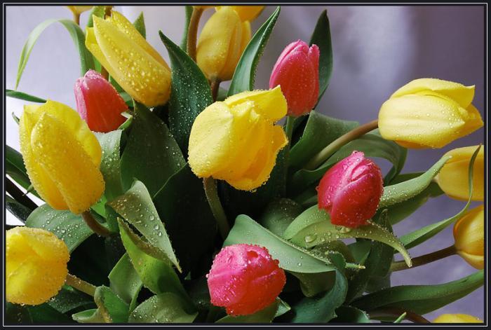 тюльпаны1 (700x471, 56Kb)