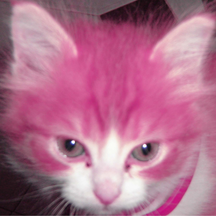 4356946_Pink_Cat_by_tiagocorreia (700x700, 256Kb)