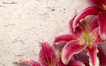 Превью Nature_Flowers_Decor_Lily__Flowers_008254_ (700x437, 140Kb)