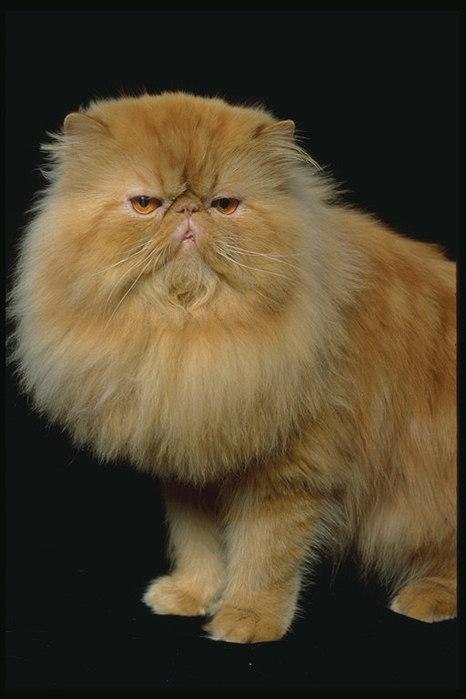 Фото из категории: Фото кошек.