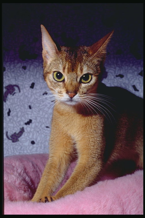 Кошки и котята Домашние животные Животные МИР ФОТО.