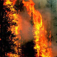 Лесные пожары 2 (234x234, 24Kb)