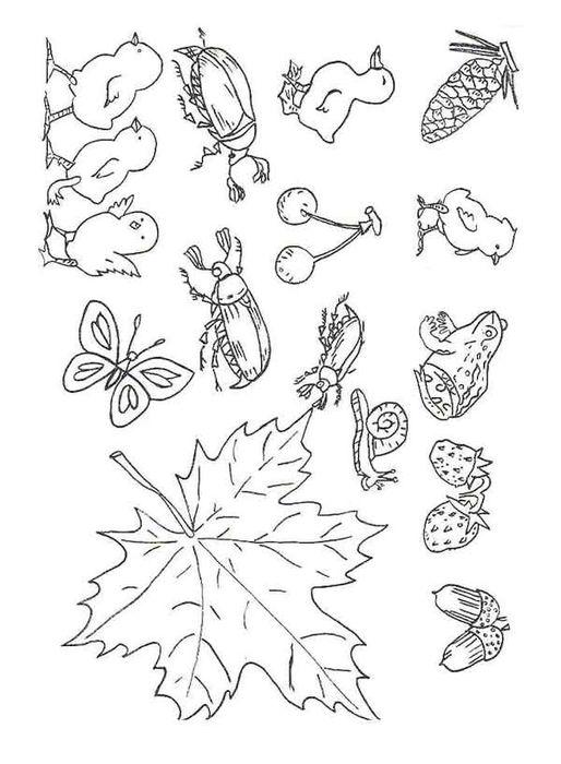 Рисунки для вышивки гладью или ришелье.
