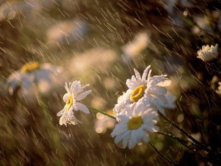 rain (450x338, 29Kb)