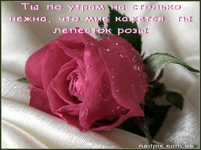 httpnadpis.com_.uaty-nezhna-kak-lepestok-rozy (700x525, 106Kb)