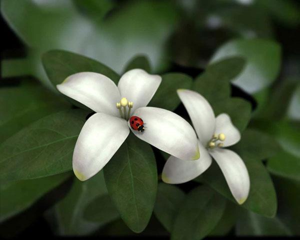 Jasmine (600x480, 30Kb)