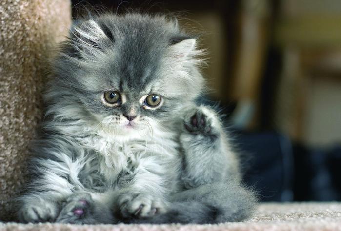 Мои любимые котята, игривые ребята