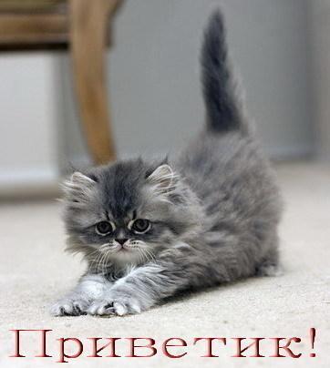 Котёнки и котята, на все вкусы и лады