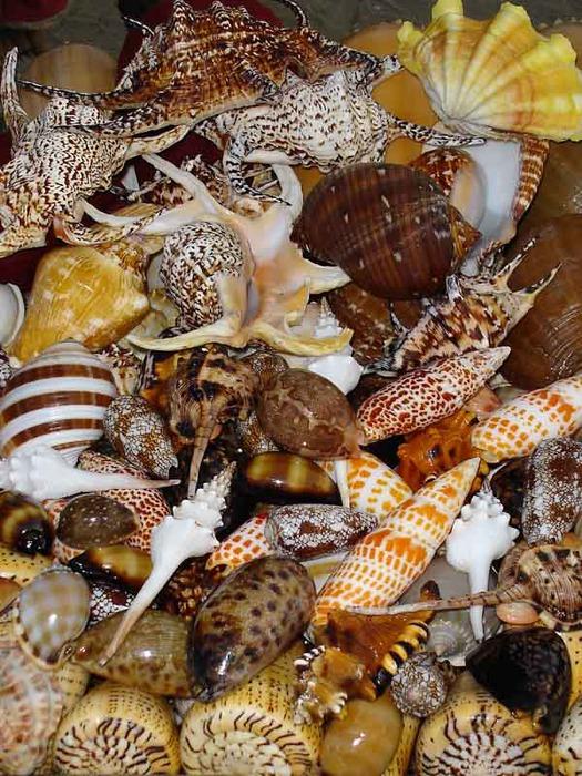 shells (525x700, 171Kb)