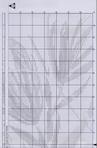 Превью 101 (455x700, 281Kb)