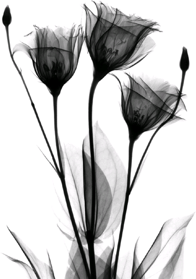 ykimp235 (398x567, 147Kb)