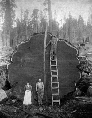 дерево (300x382, 30Kb)